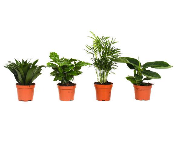 Mix van 4 Tropische Kamerplanten